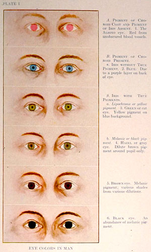 """Eye Colors in Man,"" from The Trait Book, ERO Bulletin No. 6, by Charles B. Davenport (Archive Image #1913)"
