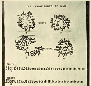 Chromosome of Man