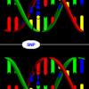 416px-Dna-SNP_svg1