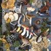 diversity-and-fungi
