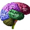 brain1-300x256