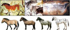 Typical horse breeds represented in cave paintings