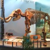 Mammut_skeleton_Museum_of_the_Earth